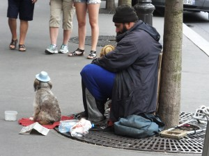 A cute little dog in a blue hat begging with his master.  He never moved an inch.
